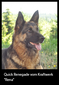 german shepherd breeders in oregon