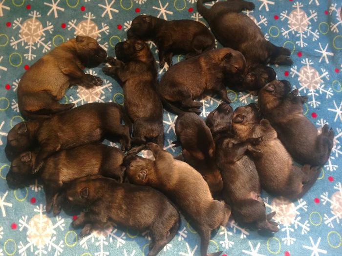 geeta-bogie-pups2