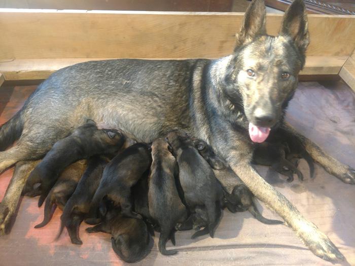 geeta-bogie-pups4